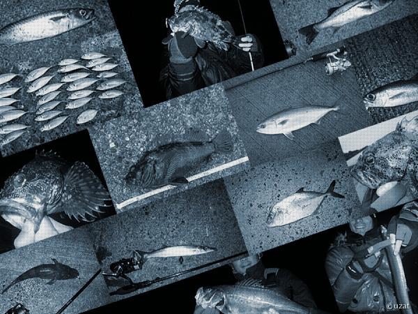 メバルタックルで釣れる色んな魚たち