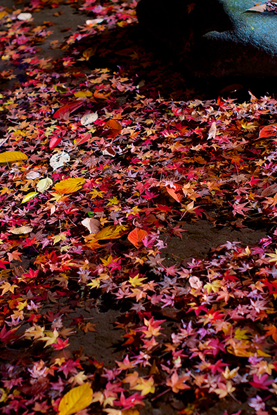 池と落ち葉