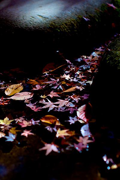 飛び石の隙間に漂う落葉