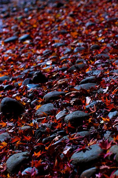 池の敷石と落ち葉