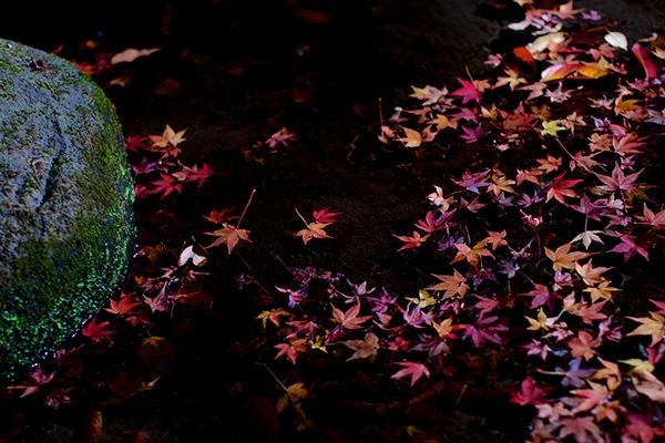 苔が生えた飛び石と落ち葉