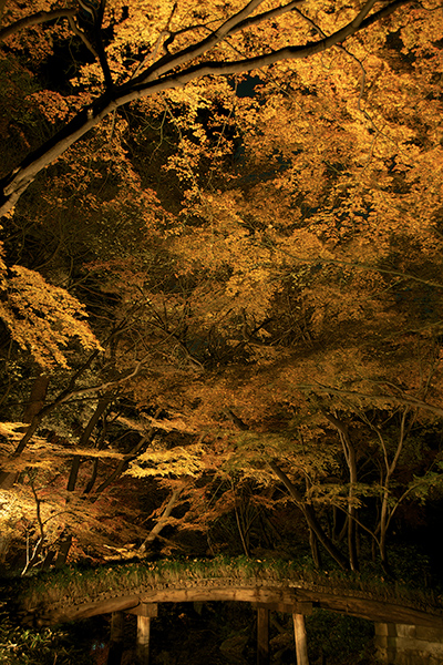 紅葉 夜景